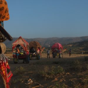 Travelling with camels to the desert of Pushkar